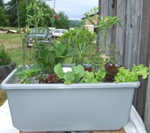 growbed7-8-09