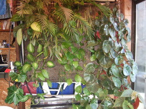 Here's the plant wall winter 2013
